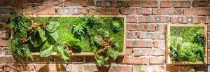 living plant art